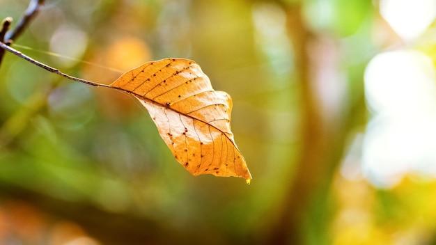 ぼやけた背景に乾燥した秋の孤独な葉