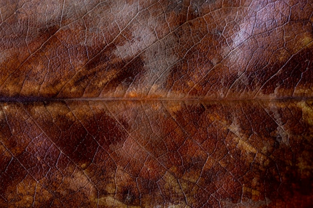 Dry autumn magnolia leaf texture. dried brown magnolia leaf with yellow spots texture background