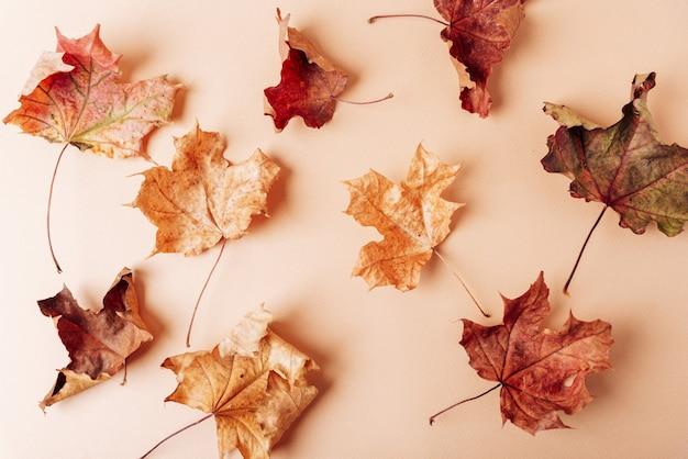 Сухие осенние кленовые листья