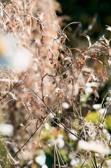 Сухие осенние растения. малая глубина резкости. выборочный фокус. необычные цвета