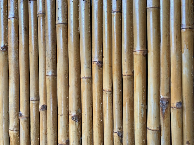 Dry bamboo fence as the background