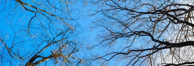 晴天の青空を背景に乾いた裸の木の枝