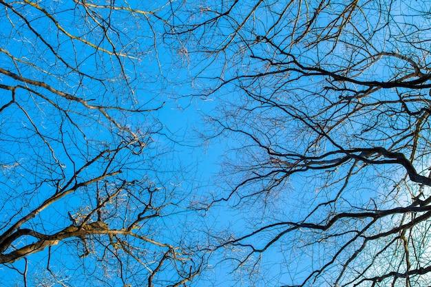 Сухие голые ветки деревьев на фоне голубого неба в солнечную погоду