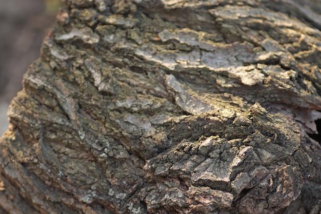 마른 나무 껍질 질감 나무 배경 회색 늑골이있는 피질 표면