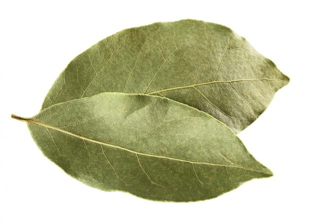 Сухой лавровый лист, изолированные на белом фоне