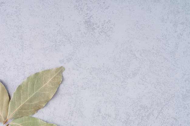 Foglie di alloro secco su sfondo di cemento.