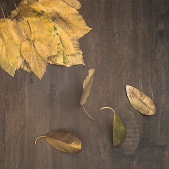 Dry birch leaves on table