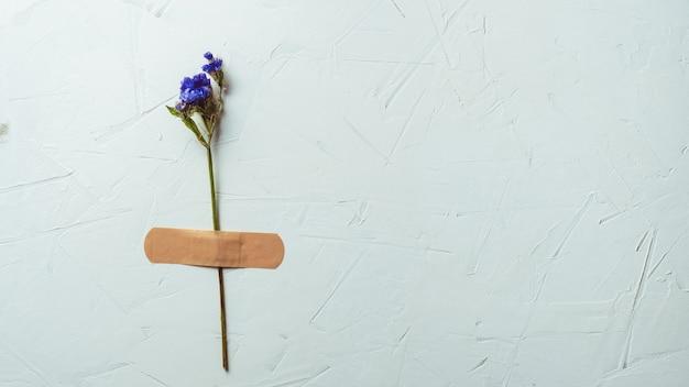 白いコンクリートの表面にパッチでテープで留められた乾燥した青い花、コピースペース