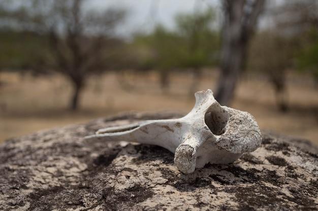 岩の上に置かれた動物の乾燥した骨