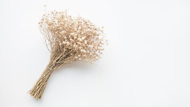 白い背景の上の乾燥した枝の花束の花