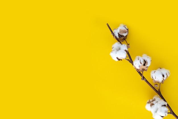 白い綿の乾いた枝