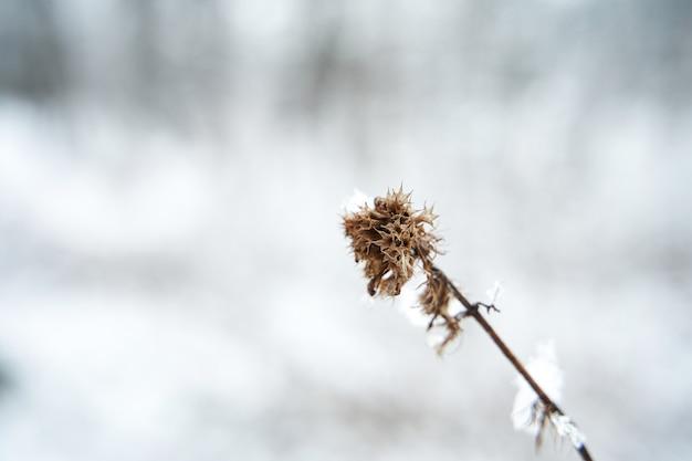 겨울 필드에 눈으로 덮여 꽃과 마른 지점. 겨울 시즌 시작
