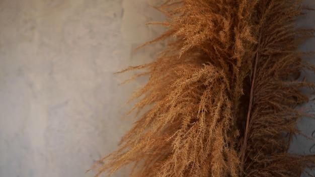 실내 갈대의 마른 가지. 회색 배경에 스칸디나비아 스타일의 객실 장식