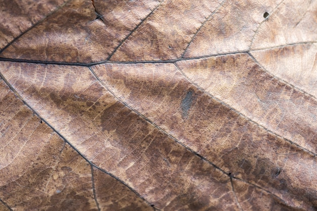 Dry brown leaf texture background