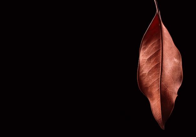 Dry brown leaf