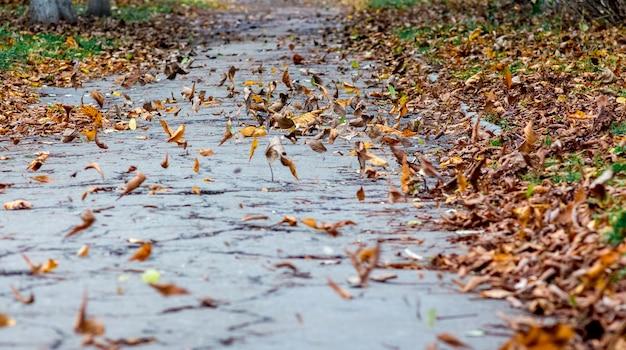秋の歩道に茶色の葉を乾燥