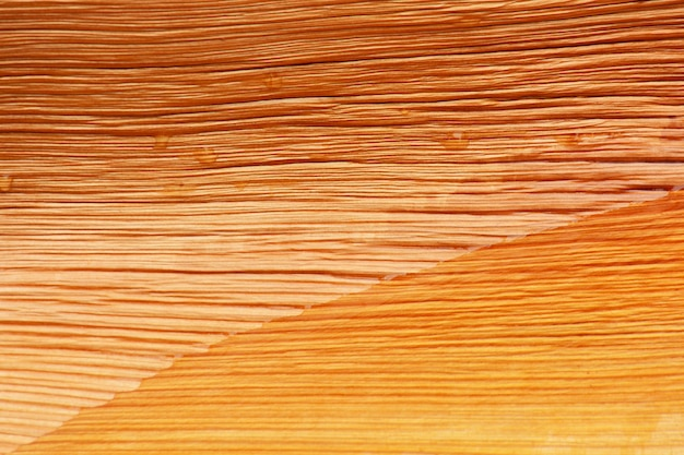 Dry brown palm leaf texture
