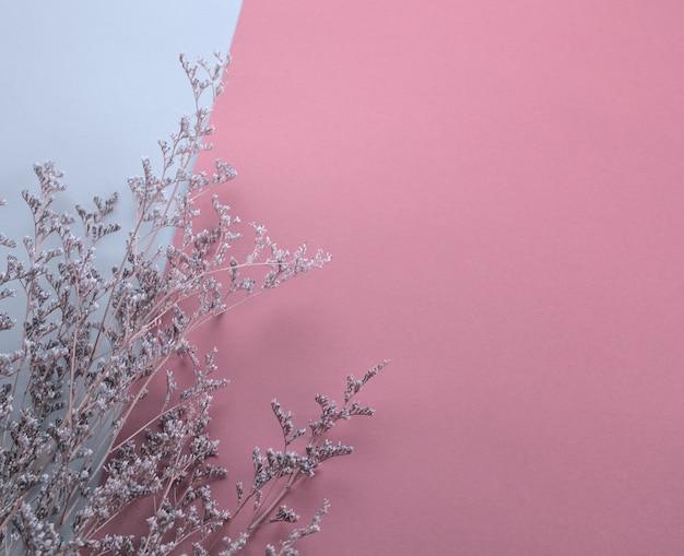 Сухой пушистый фиолетовый цветок плоский лежал на пастельном розово-белом фоне