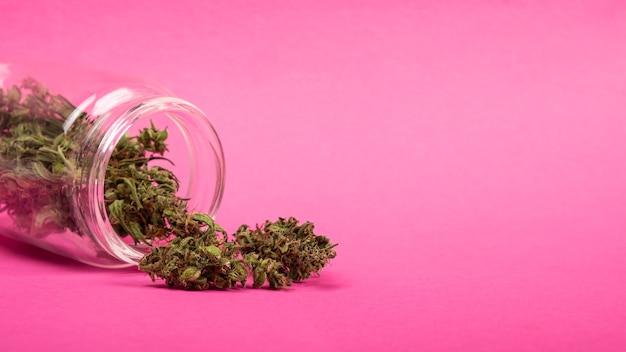 분홍색 배경 의료용 마리화나에 있는 항아리에서 테이블에 마른 대마초 싹을 뿌렸습니다