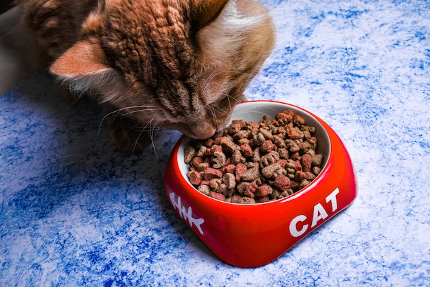 Dry cat food in a red bowl with the inscription cat. cat eats dry food from a bowl