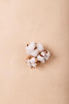갈색 종이 표면에 마른 목화 꽃. 평면도, 평면 누워. 크리에이티브 레이아웃