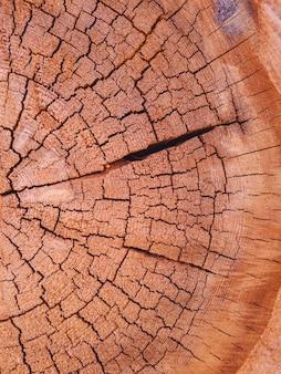 Сухой потрескавшийся срез ствола дерева