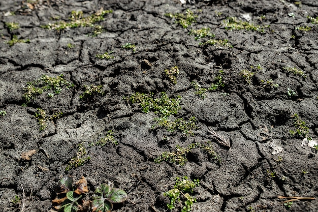 Dry, cracked earth, greens