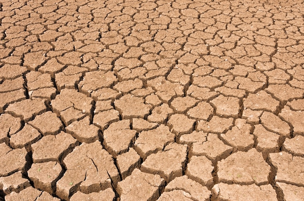 Dry cracked soil.
