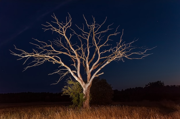 A dry dead tree stands in the middle of a field with grass against the night sky