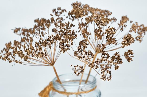Сухие семена укропа крупным планом в стеклянной вазе