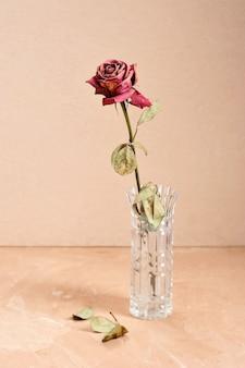 クリーム色の背景の上に花瓶の乾燥した乾燥したバラ