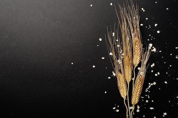 黒い背景に麦の穂を乾燥させます。収穫します。コピースペース