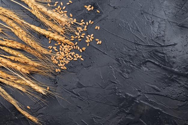 Сухие колосья пшеницы на темно-сером фоне. место для текста