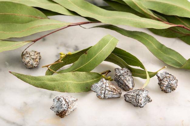 Dry eucalyptus leaves. herbalism, natural remedies