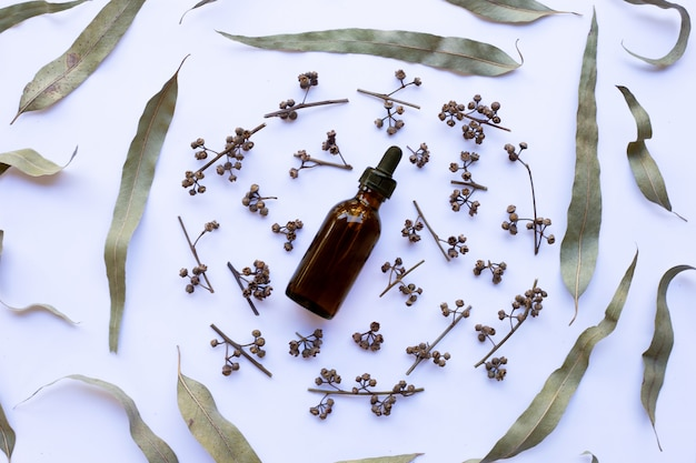 Dry eucalyptus seeds and leaves with essential oil on white background.