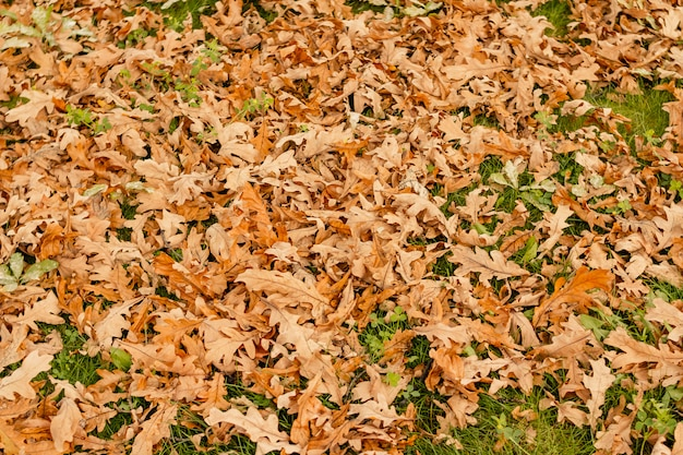 Dry fallen autumn leaves on the grass