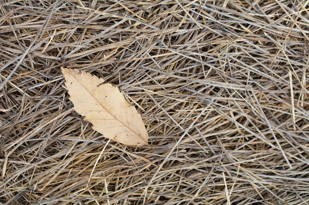 Dry and fallen leaf in the autumn on the straw of the field