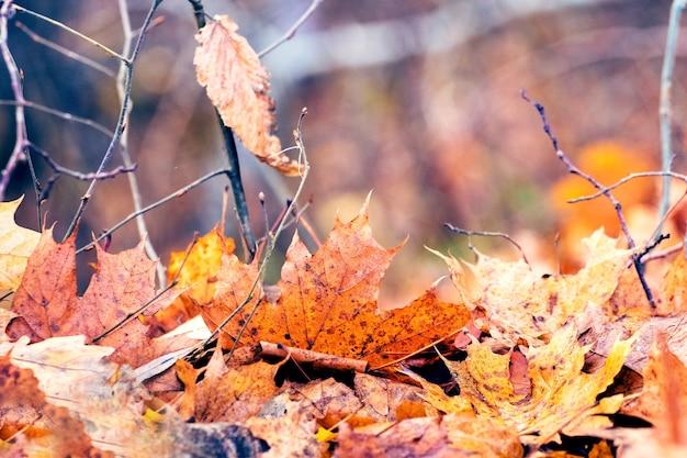 秋の森の地面に落ち葉を乾かす