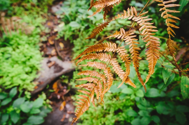 Dry fern on a green background.