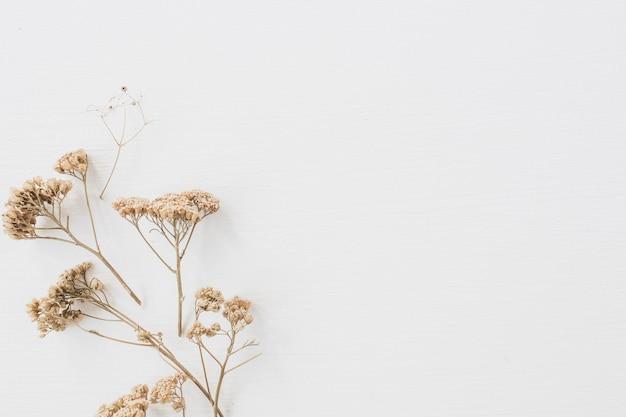 白い背景の上の乾燥した花の枝。