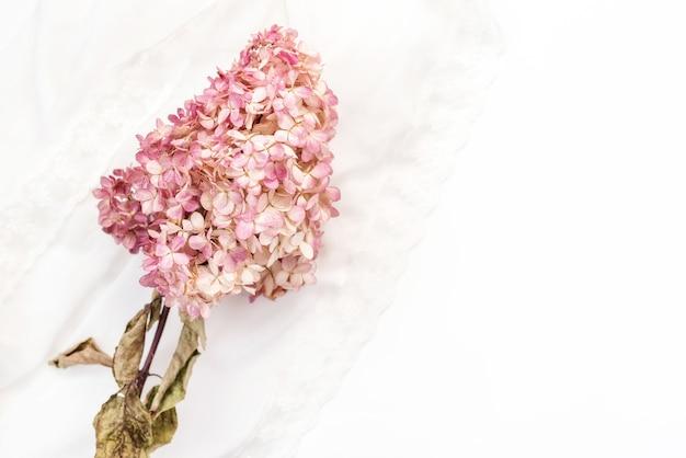 白い背景の上の乾燥花枝ピンクのアジサイ