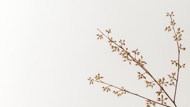 Сухая цветочная ветка на белом фоне