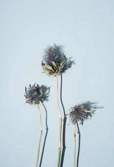 青いとげのある花を持つセリ科の青い頭の植物のドライフラワーエリンジウム、コピースペースのある青い背景に茶色の茎。美しい雰囲気の花カードのコンセプト。水平