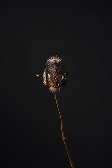 青いとげのある花を持つセリ科の青い頭の植物のドライフラワーエリンジウム、コピースペースのある暗い背景に茶色の茎。美しい雰囲気の花カードの概念。水平