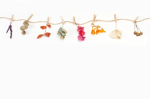 Dry flowers and leaves hanging by a thread on a white background with copy space