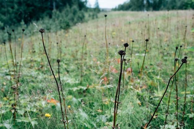 緑の牧草地の背景にドライフラワー