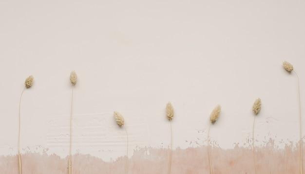 Сухие цветы на белой текстурированной поверхности