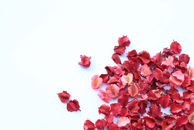 Dry flowers petals isolated on white background