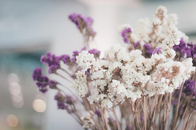 마른 꽃 선택 초점 흐림 배경, 화려한 마른 꽃 배경 흐림