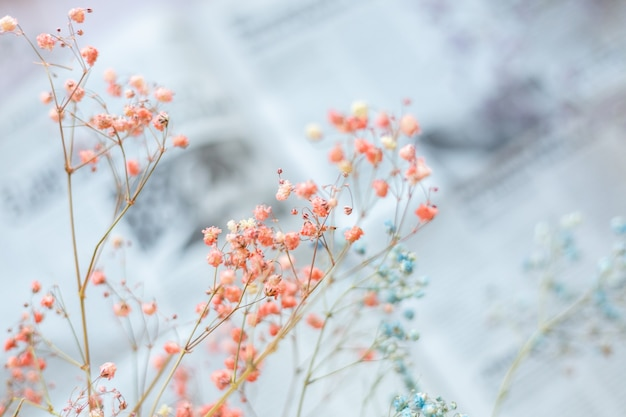 Dry flowers on the surface of the newspaper, selective focus, spring mood